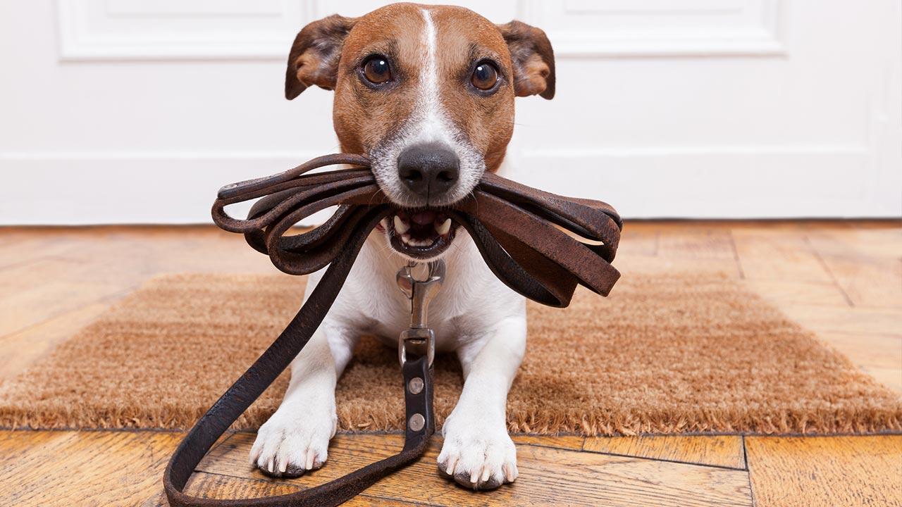 Vorteile der Laufleine für Hunde - ein Hund mit der Leine im Mund