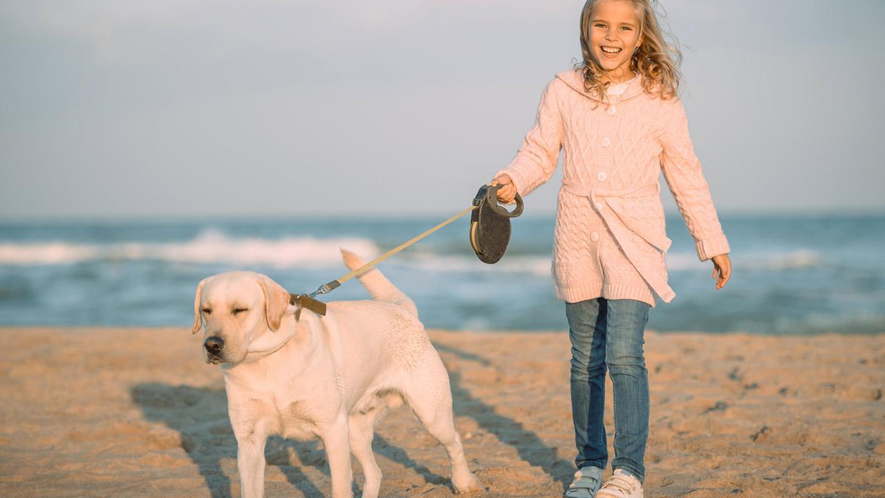 Vorteile der Laufleine für Hunde - ein Hund mit einer Laufleine am Strand