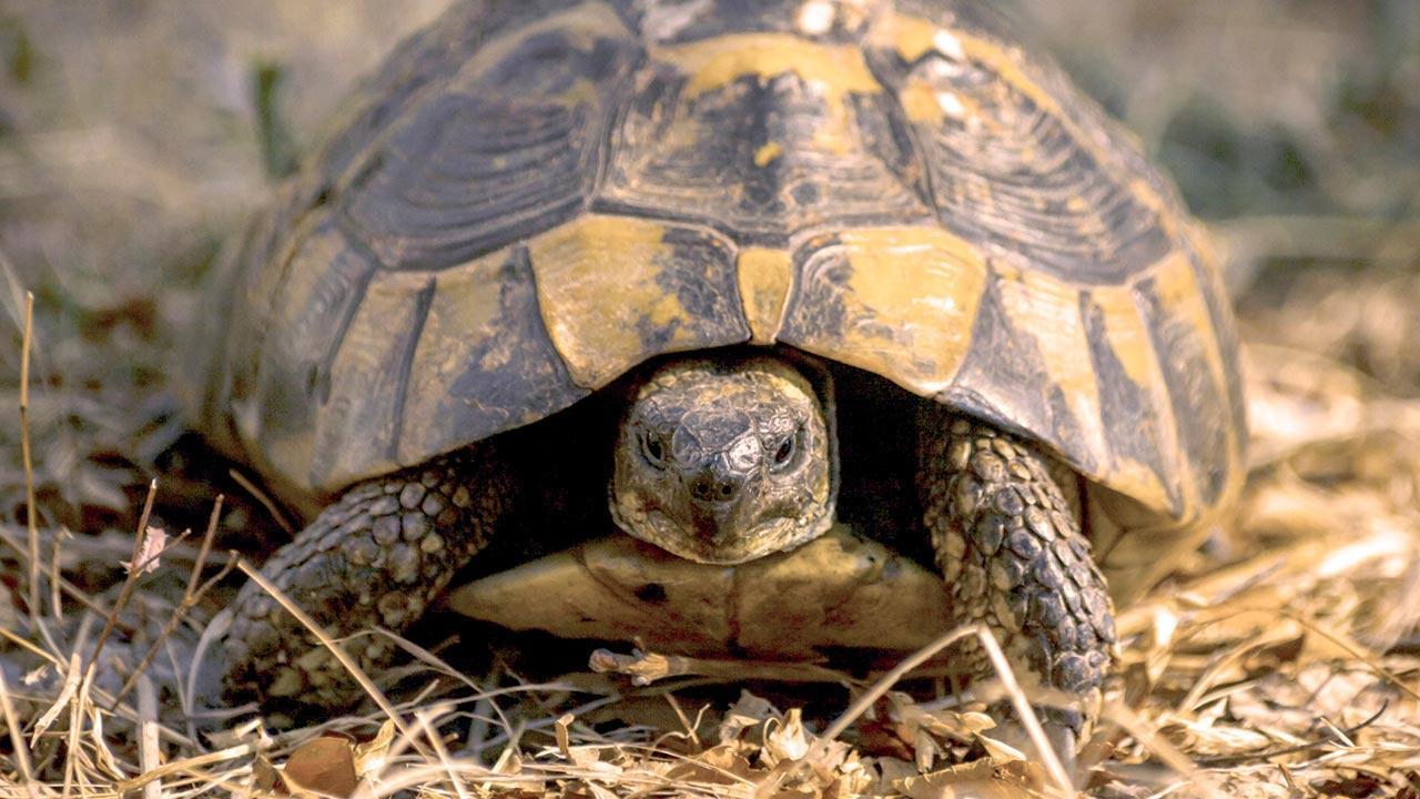 Was macht meine Schildkröte im Winter - eine Schildkröte