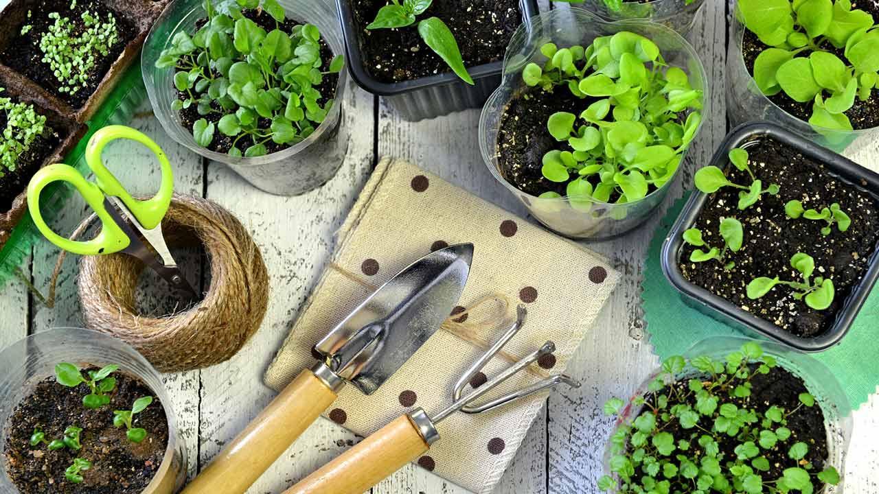 Kräuter im Haus Vorziehen - kleine Töpfe mit frischen Kräutern